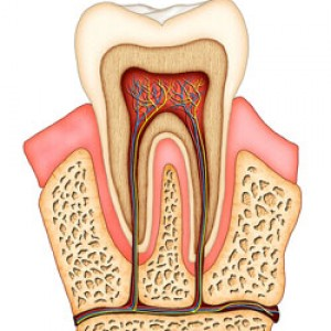 6th Ave Periodontics and Implant Dentistry Root Canal Treatments